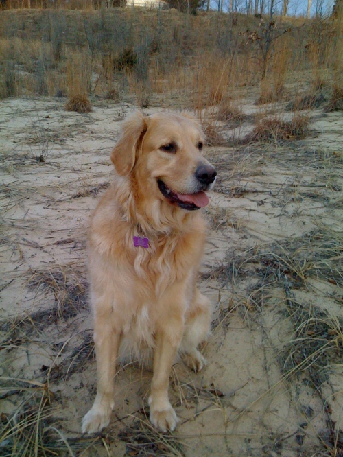 At the Indiana Dunes