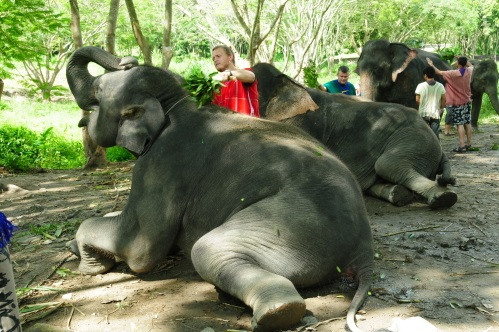 An elephant exfoliator.  The key to looking young is proper maintenance!